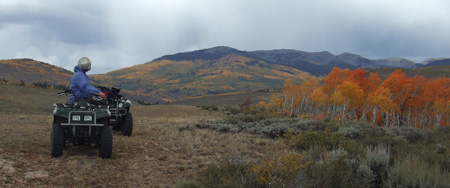 ATV and aspens